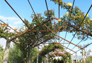metal-grape-pergolas-001