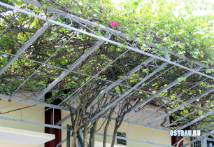 metal-grape-pergolas-002