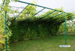 metal-grape-pergolas-007