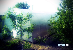 greenhouses-mounting-000